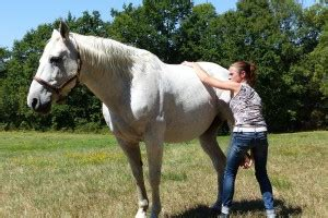 Equine | Osteo Equin & canin