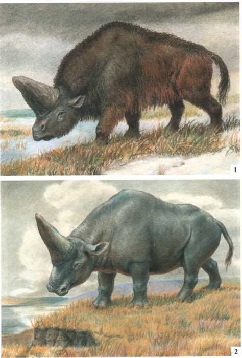 Elasmotherium and the mysterious case of the massive horn